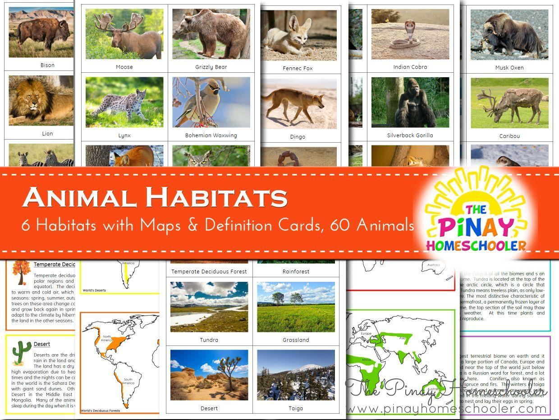 500+ Best animal characteristics images   teaching science, science  activities, kindergarten science