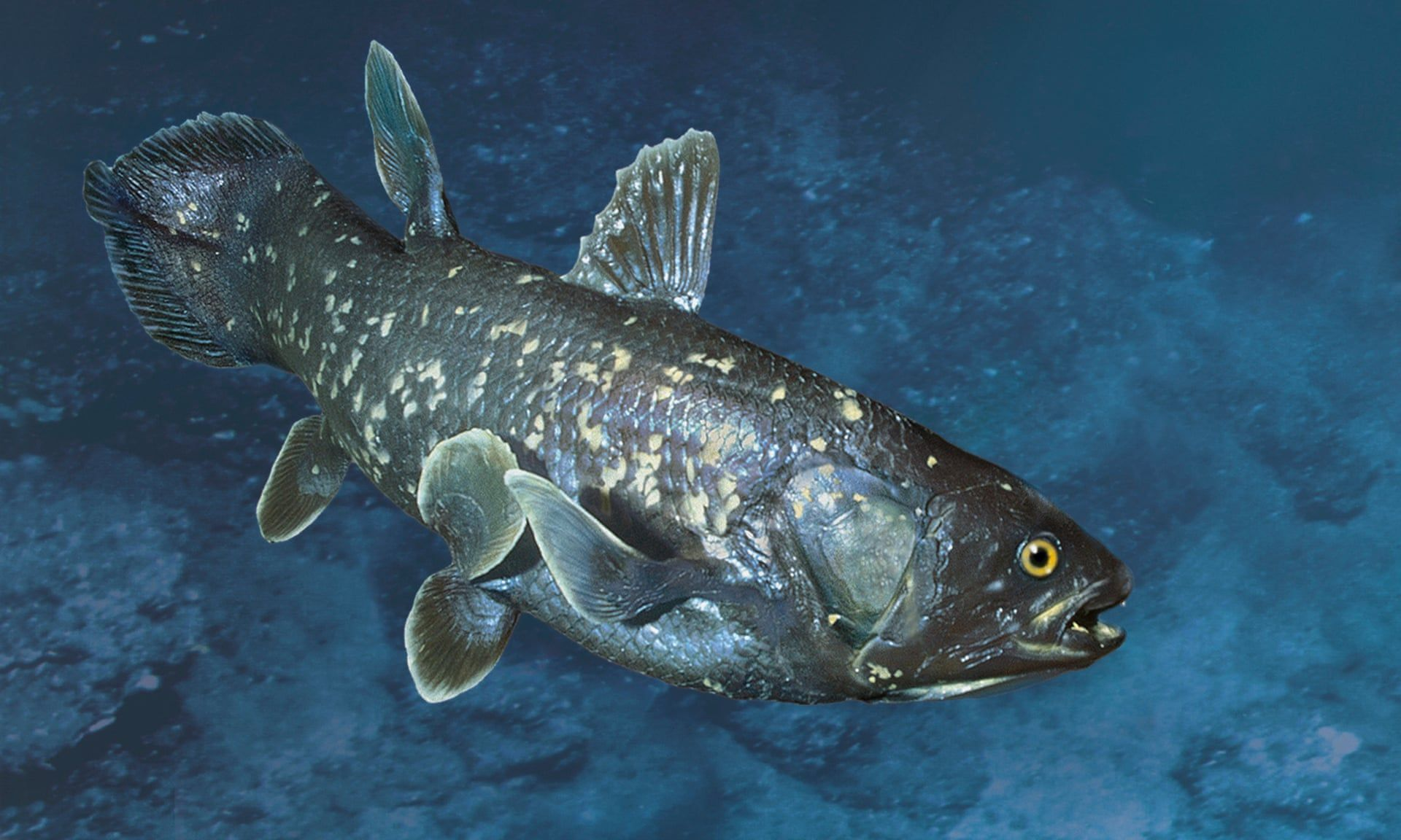 Coelacanth. This large fish had been considered extinct