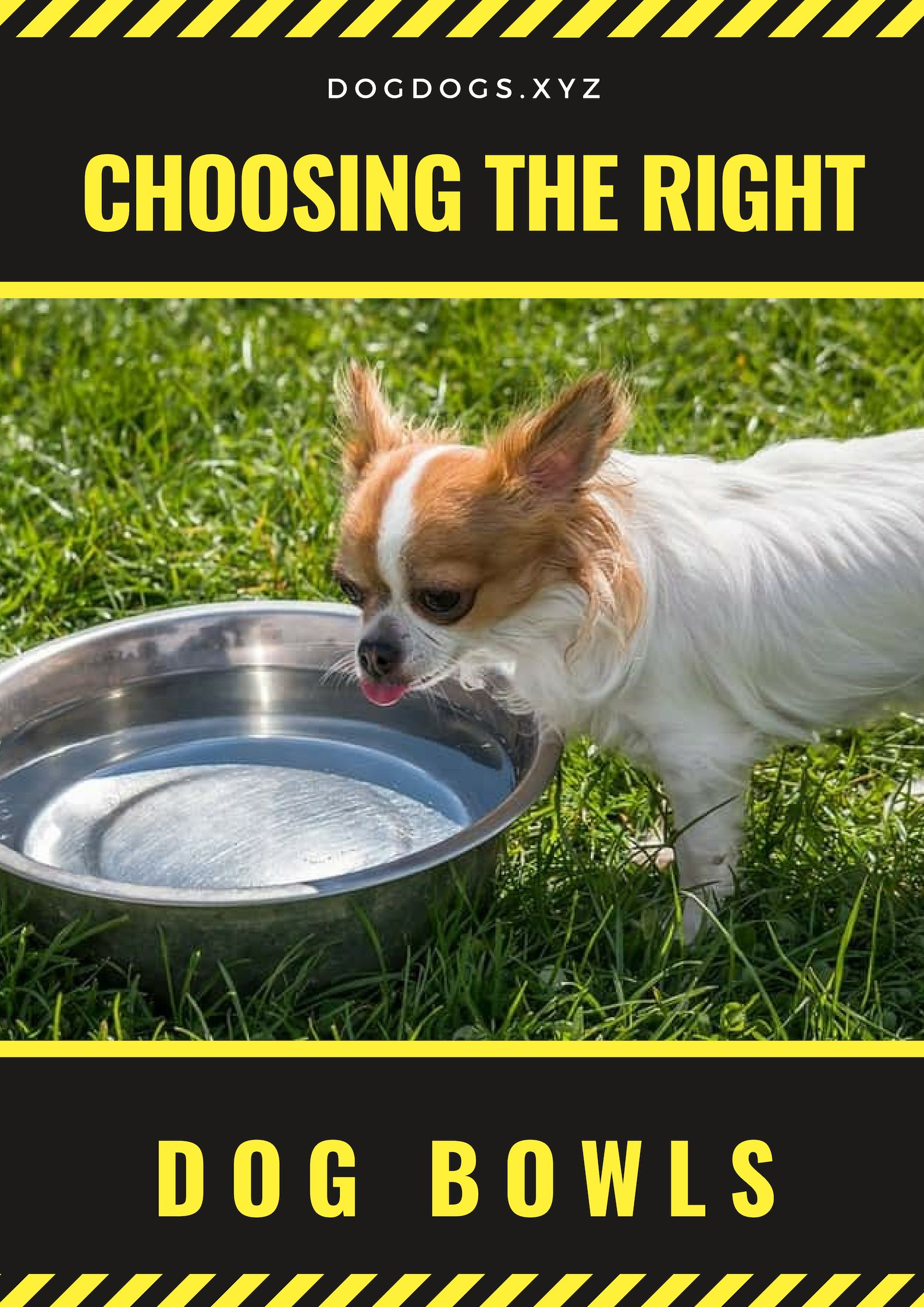 Among The First Things You Need To Do As A Dog Owner Is To Buy