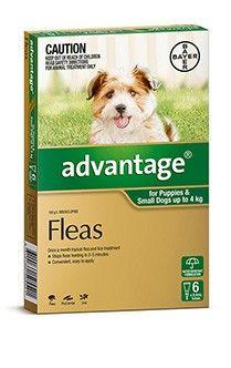 Advantage Dog 0 4kg Small Cat Fleas Flea Control For Cats Flea Meds For Cats