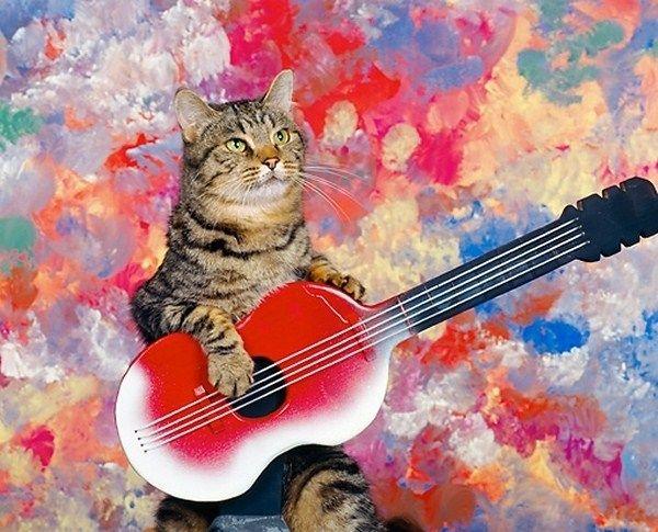 гитара и животные картинки редких интересных