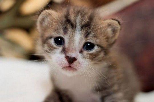 kittens35