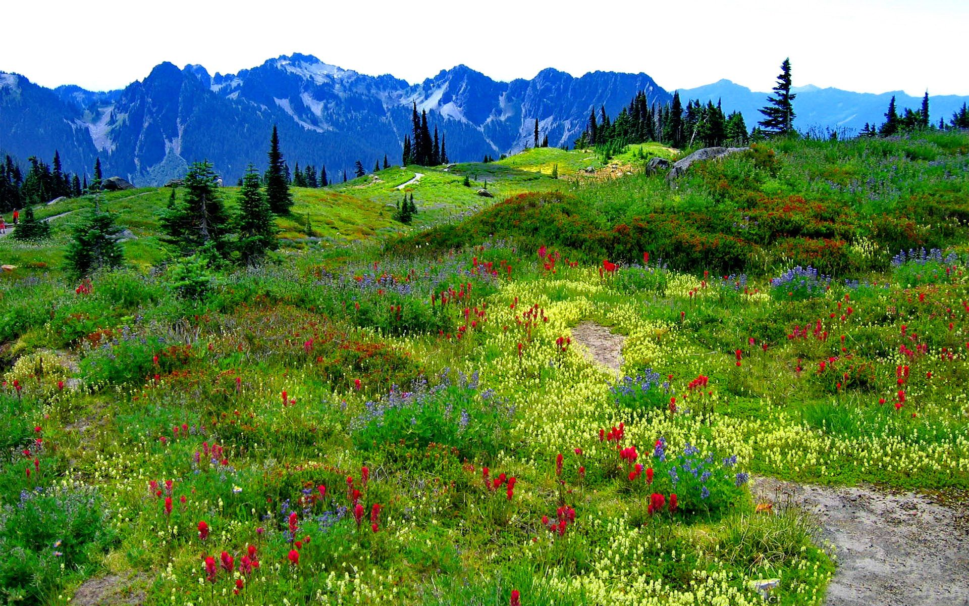Download Green Mountain Meadow With Flowers In Multiple Colors Mountains With Snow Wallpaper For Desktop F Desktop Wallpaper Green Mountain Mountain Wallpaper
