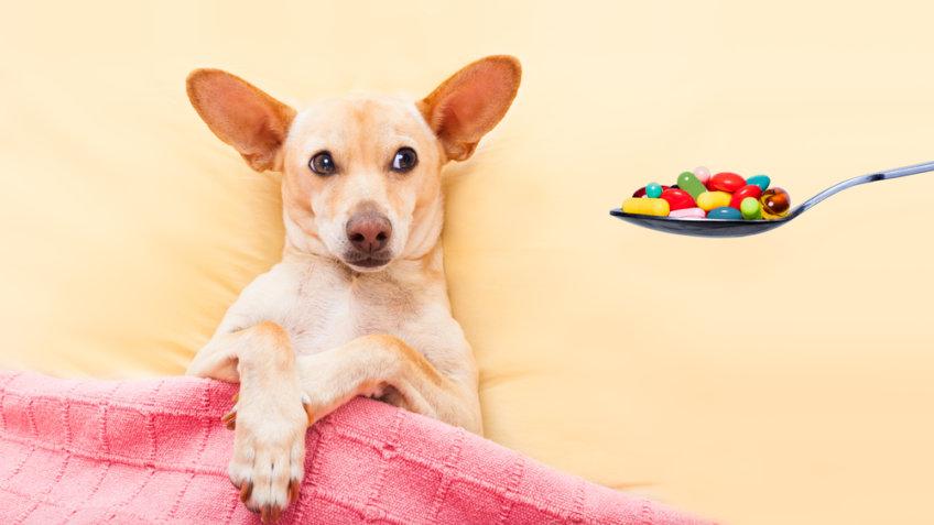 Ludzkie leki dla psa. Jakie lekarstwa z apteczki możemy
