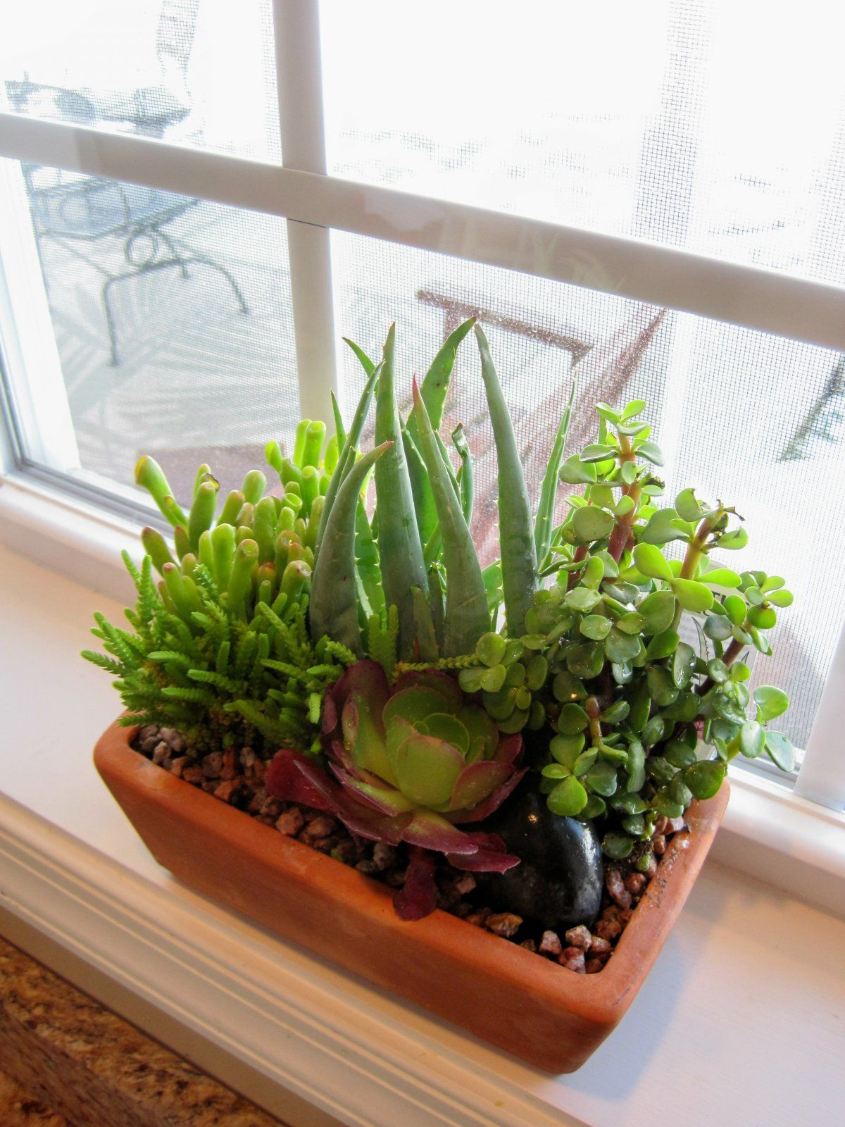 Beautiful Indoor Small Aloe Vera Plant Decoration Ideas Decoration Interior 1200x1600 Pixels