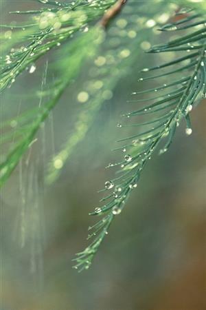 morning dew blog