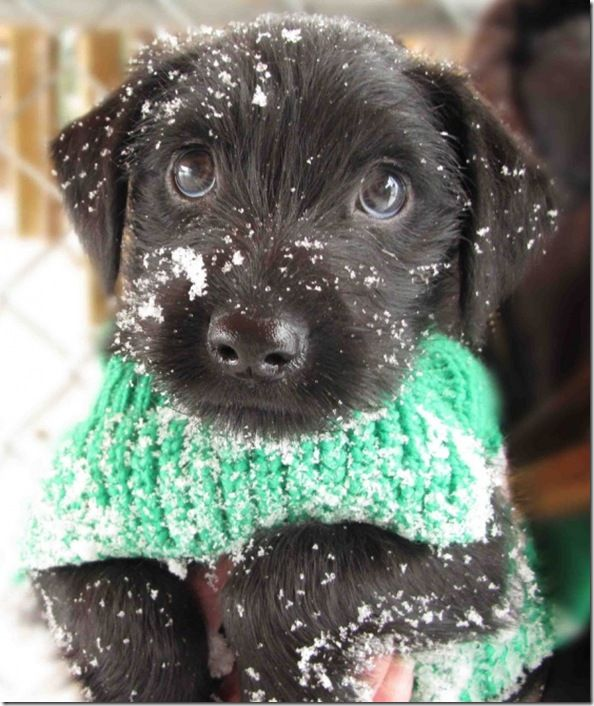 Puppy's first winter....