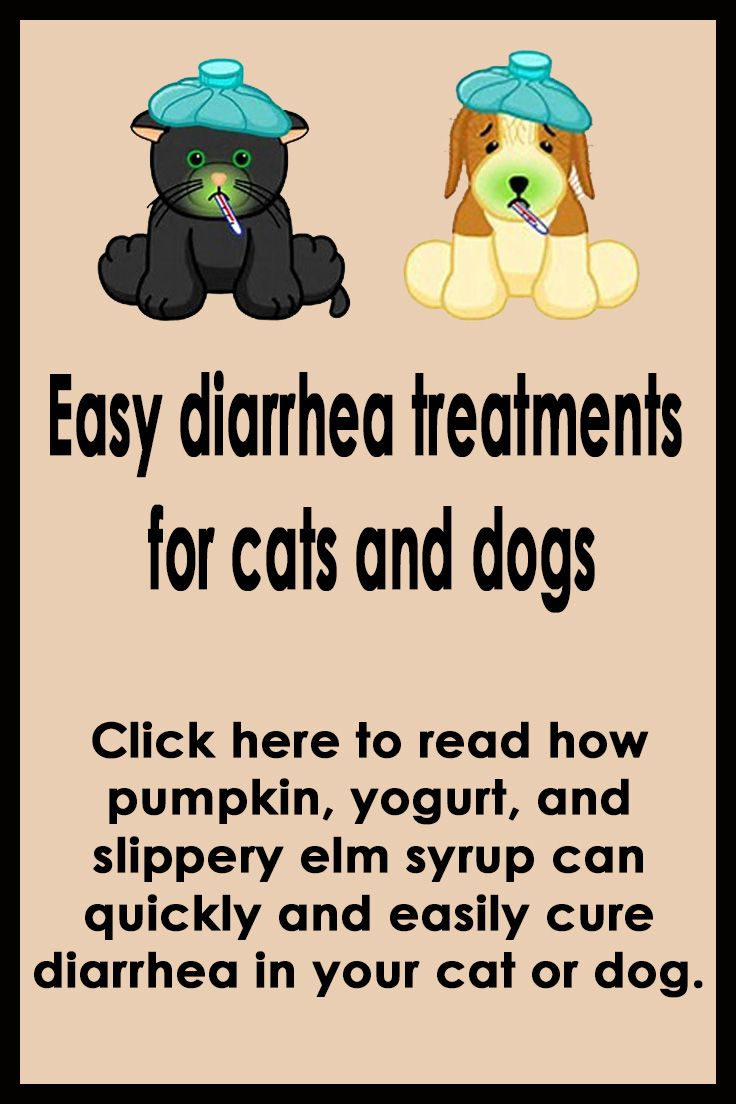 Easy Diarrhea Treatments For Cats And Dogs Dog Diarrhea Remedy Cat Diarrhea Diarrhea In Dogs
