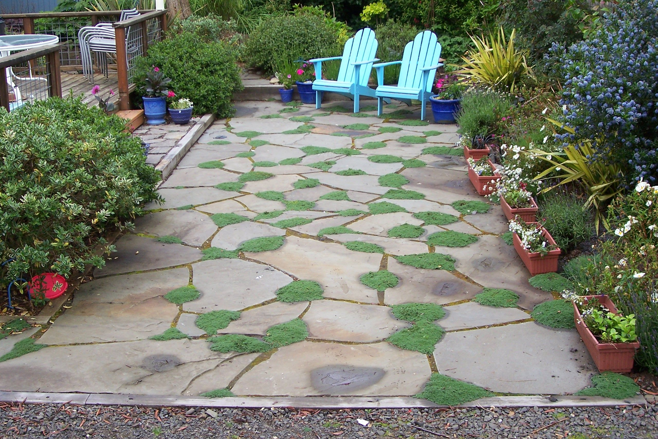 Irregular Bluestone Patio With Elfin Thyme Planted In Grout Lines. Designed  And Installed By Bros
