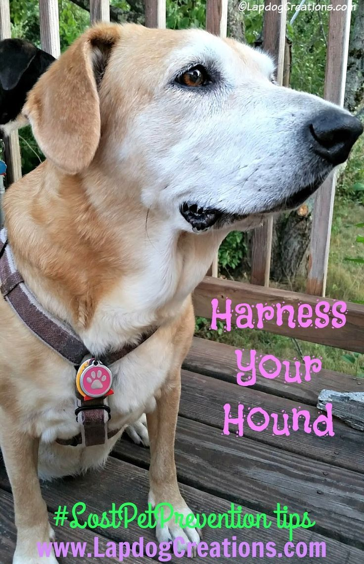 Keep Your Newly Adopted Dog From Be ing a Lost Dog