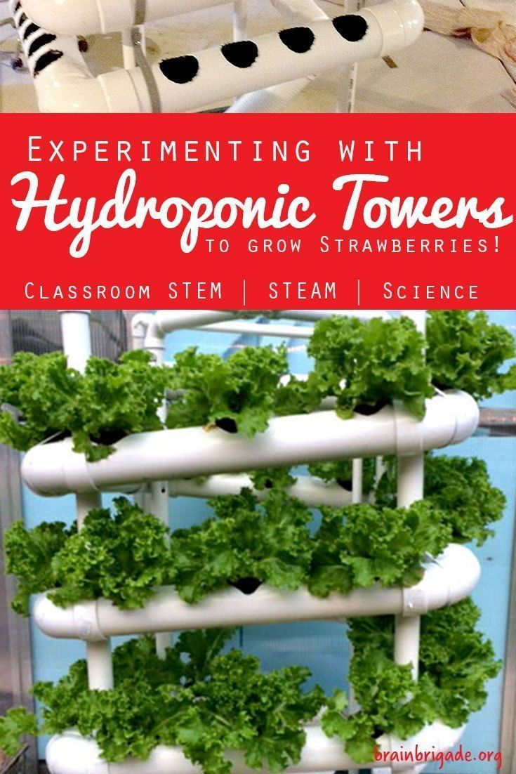 Experimenting with Hydroponic Gardening to Grow Strawberries  Brain Brigadebbrain