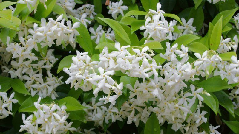 Fragrant Southern Flowers for Your Garden is part of Southern Shade garden - Just one whiff of these blooms will make you swoon