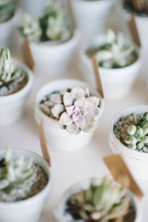 Decoration De Table Plantes Grasses Cadeau Invite Cadeau Et