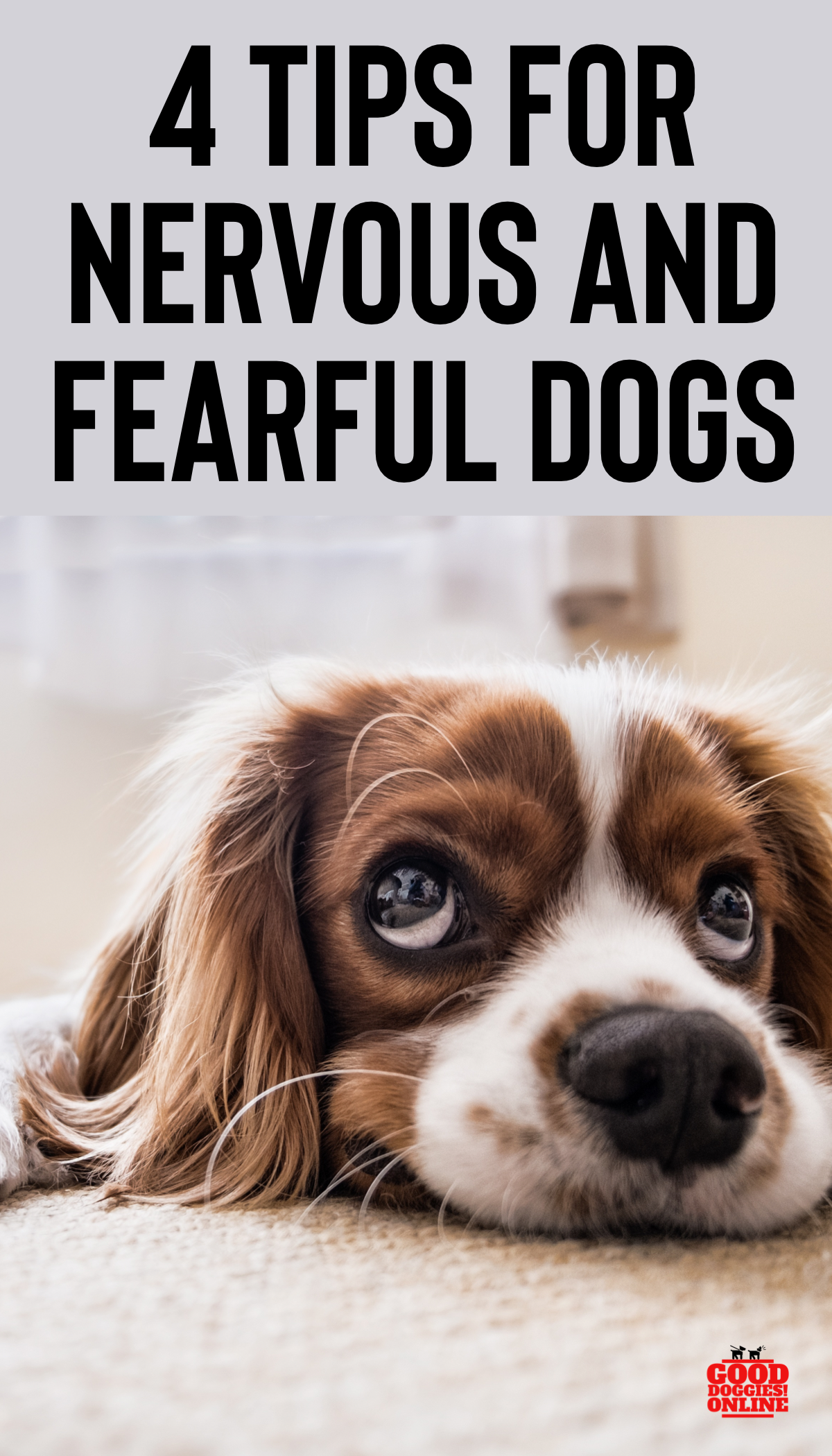 4 Tips for Nervous and Fearful Dogs Dog psychology, Dogs