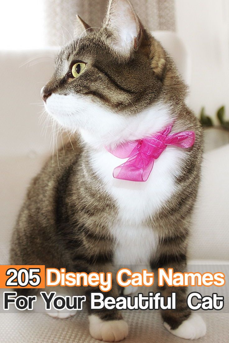 Here is a great list of Disney cat names for your
