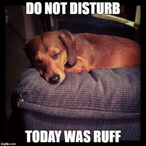 8 Funny Dachshund Memes Funny Dachshund Dachshund Funny Quotes