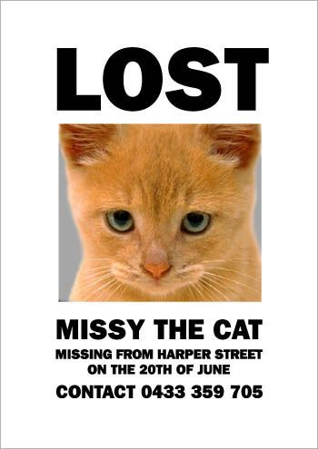Yeah Thats Not What I Was Looking For At All Lost Cat Poster