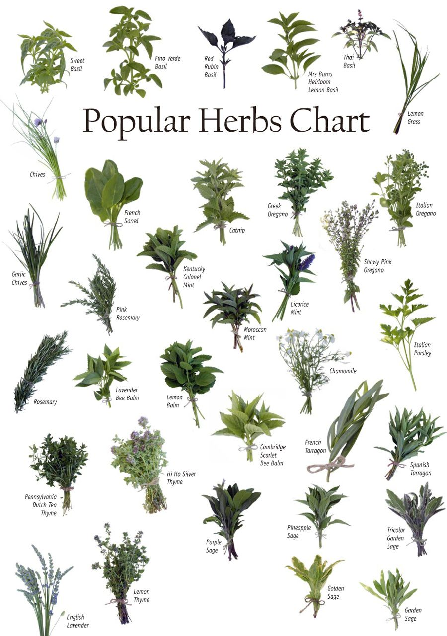 Identifying Herbs Powers Of Natural Herbs Health And