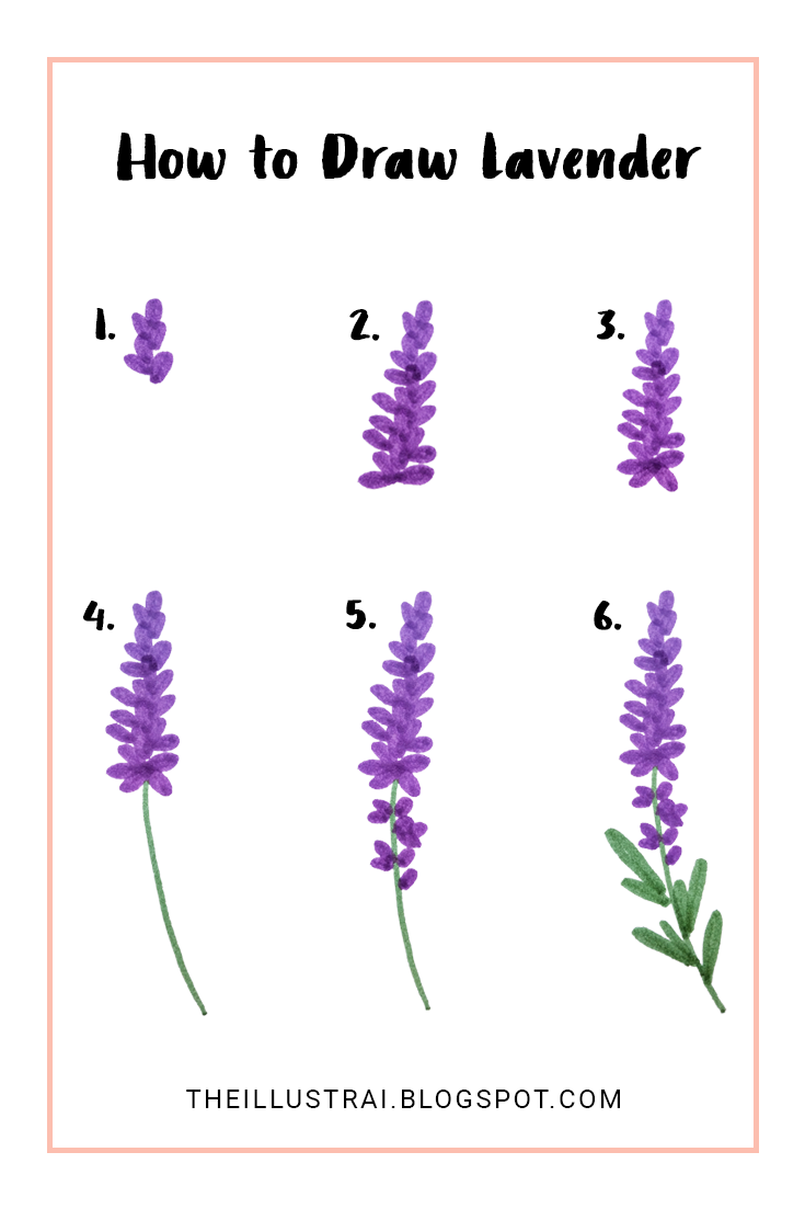 How to draw lavender in 6 easy steps the illustrai pinterest this is a very easy tutorial on how to draw lavender flowers in six steps you will be able to create beautiful drawings of lavender that you can add to izmirmasajfo