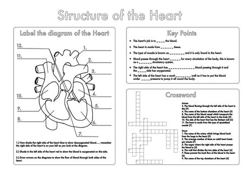 Image result for villi diagram gcse | Biology worksheet ...