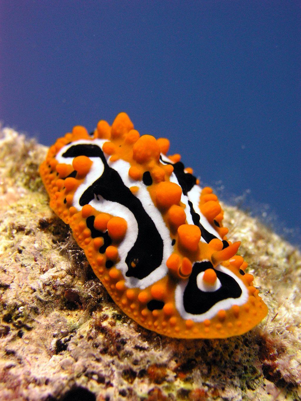 Beautiful Sea Snails Google Search Sea Snail Snail
