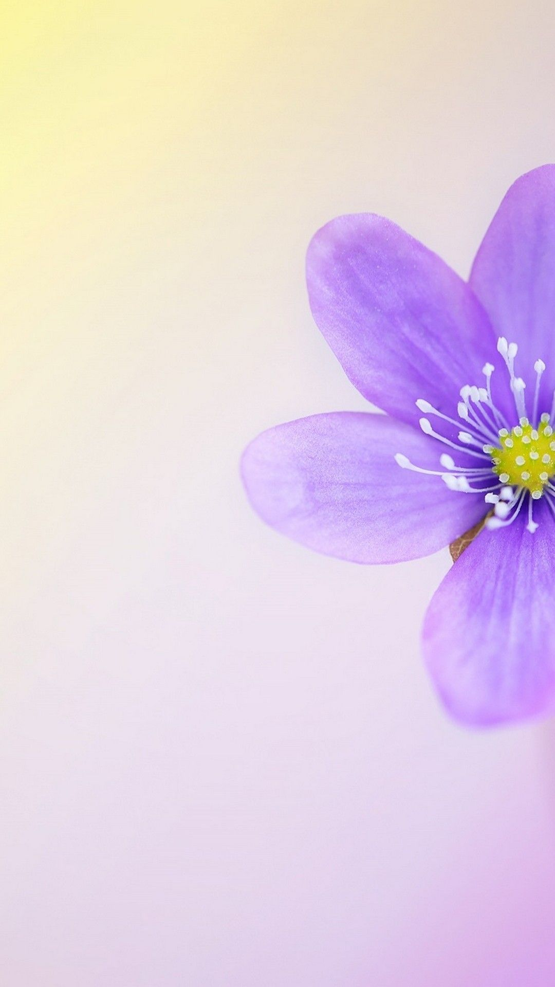Beautiful Spring Backgrounds For Android Best Android Wallpapers Spring Background Android Wallpaper Spring Wallpaper