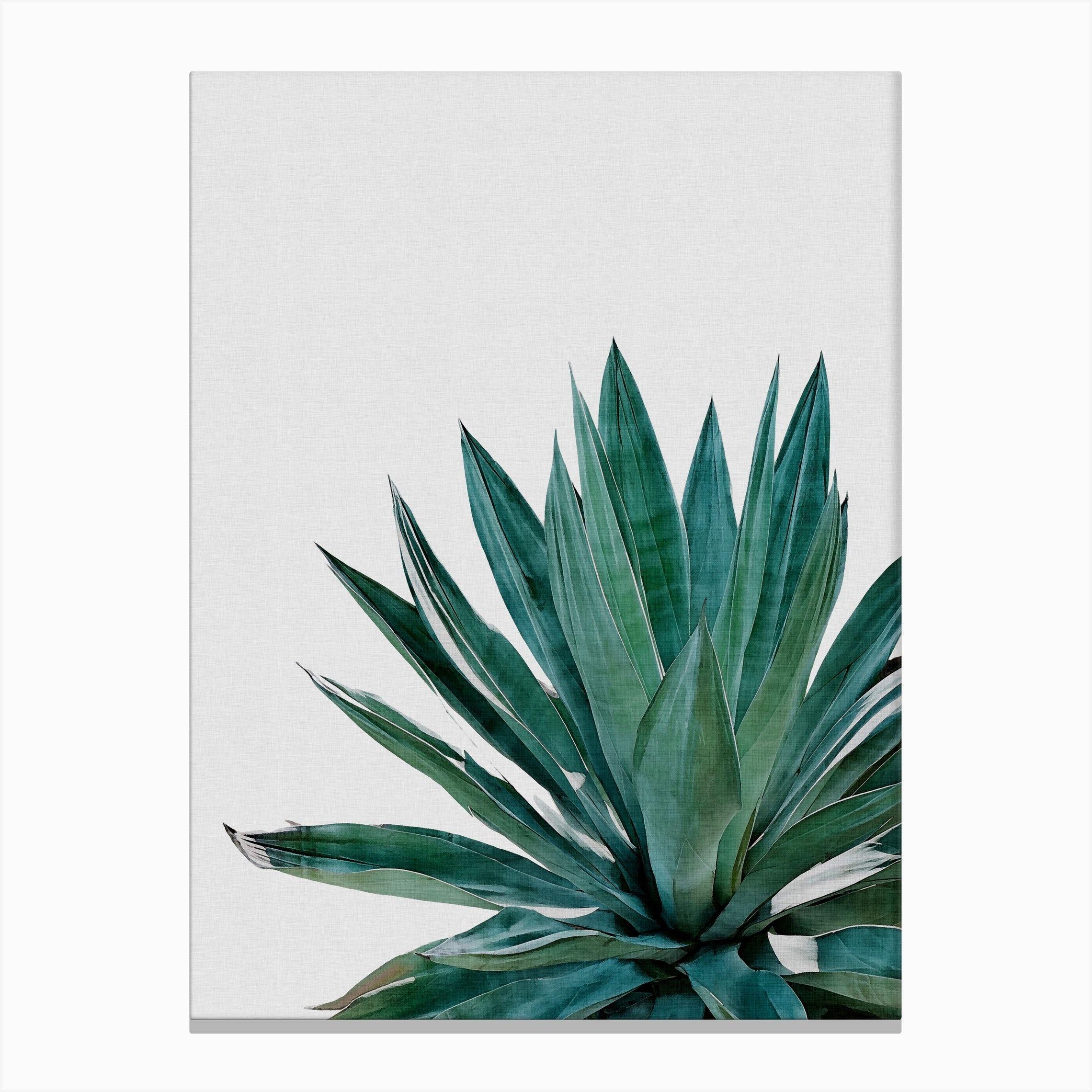 Agave Cactus Canvas Print In 2020 Cactus Poster Cactus Art Graphic Art