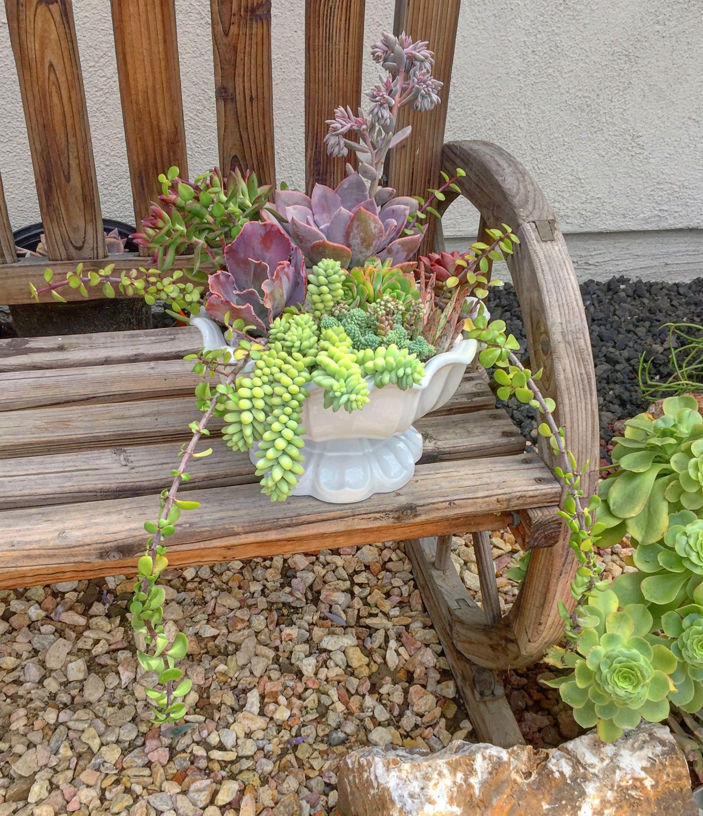DIY landscaping with succulents image by Jayr Zhel Jad