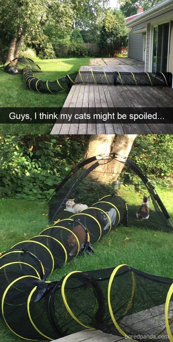 42 lustige Katzen-Snapchats, die Sie im Augenblick sehen müssen #kittycats