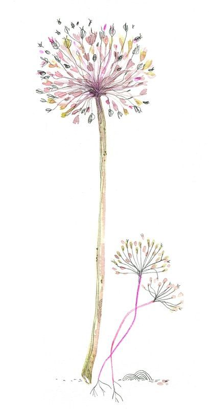 C cile hudrisier how to draw pinterest cecile - Dessin fleur pissenlit ...