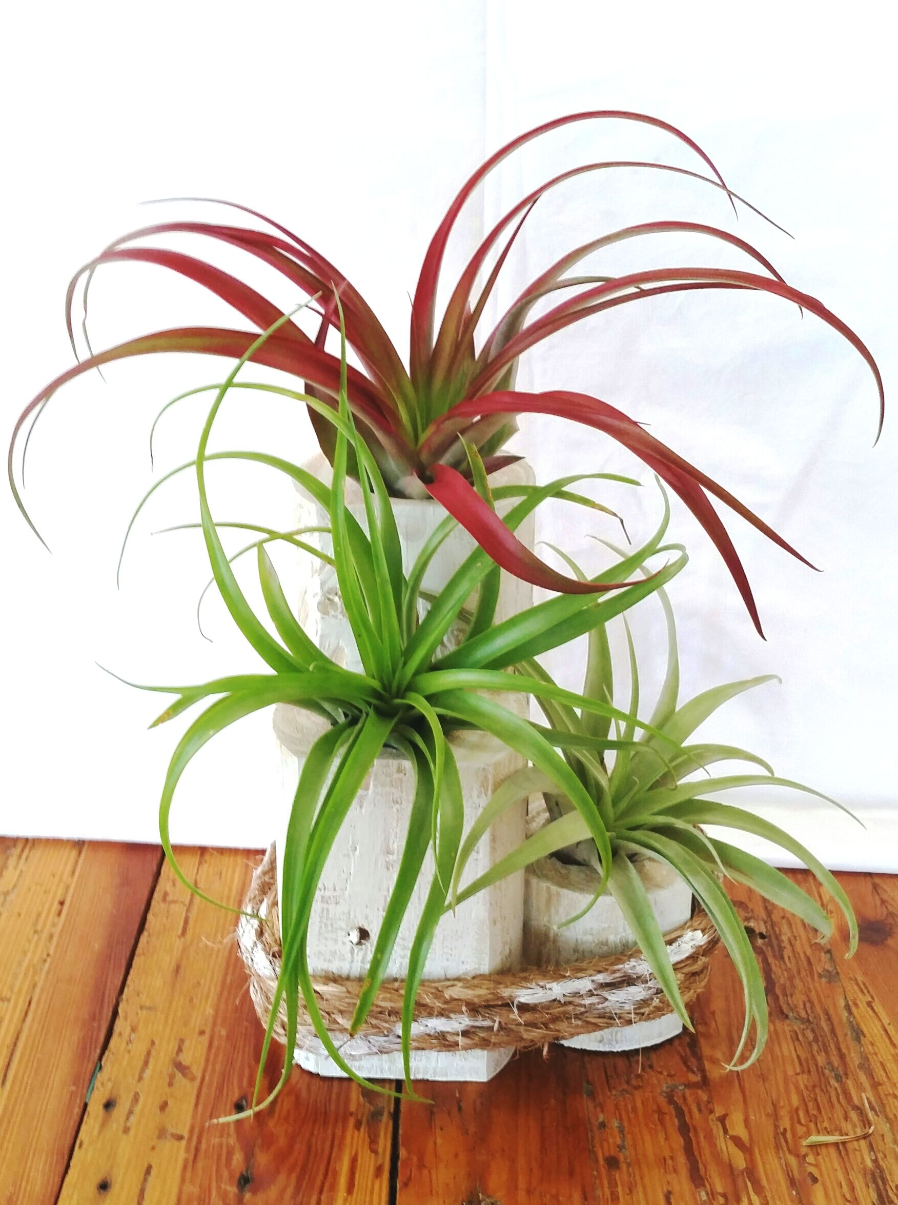 New Shabby Chic wooded planter with air plants Air plant