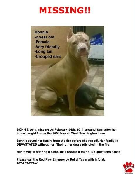 Lost In Philadelphia Pa Losing A Dog Losing A Pet Pets