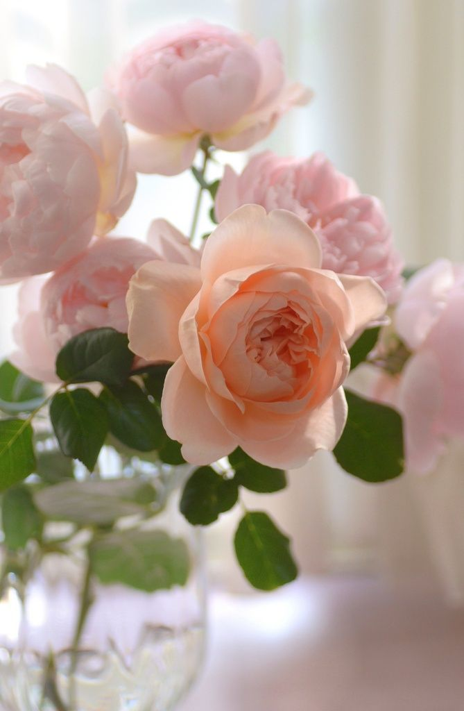 Sweet loving roses.......     Aline♥