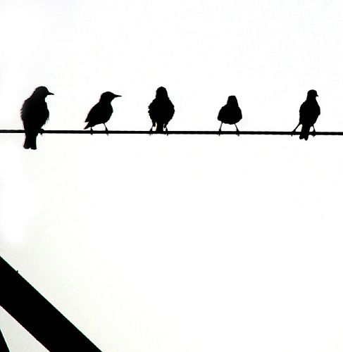Birds on Wire | Pinterest | Bird, Stenciling and Pallet art