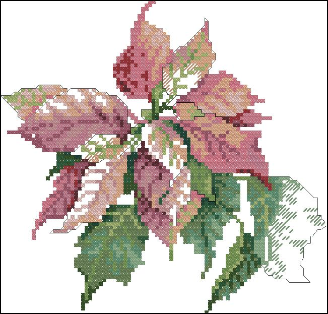 Pastel Poinsettia