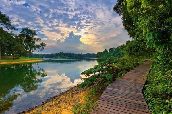 Macritchie Reservoir Park You Ll Singapore Attractions Singapore Island Reservoir