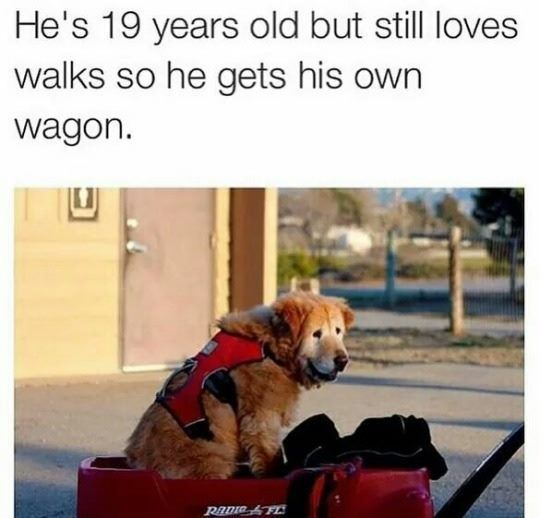 28 Cute and Funny Animal Memes You Need - -