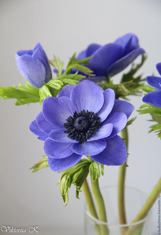 Цветы анемоны где купить на 8 марта подарок девушке