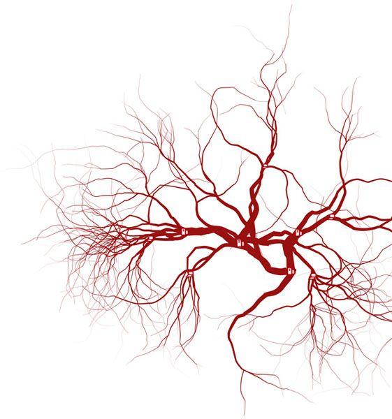 Arteries Art Inspo Pinterest Anatomy Human Anatomy And Animation