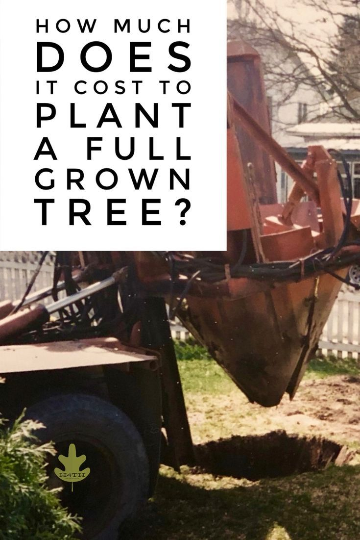 How Much Do Fully Grown Trees Cost? | Plants, Big tree ...