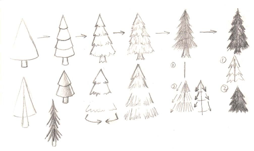 Pine Trees Stylized Simplified Pine Tree Drawing Tree