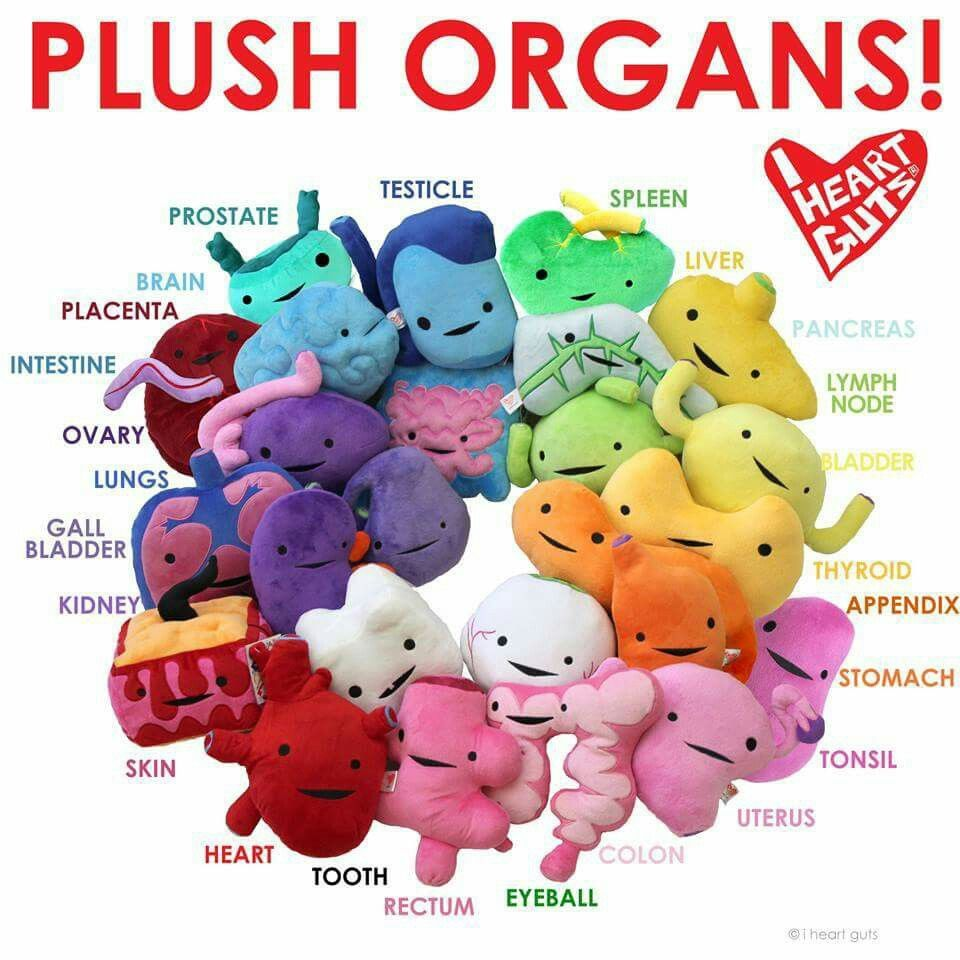 Plush organs - homeschool, science, anatomy -  http://www.amazon.com/s/ref=as_li_ss_tl?url=search-alias%3Daps&field-keywords=i+heart+guts&linkCode=sl2&tag=thenatuhome-20&linkId=3335a6d60958581a2db0bef0545995c8