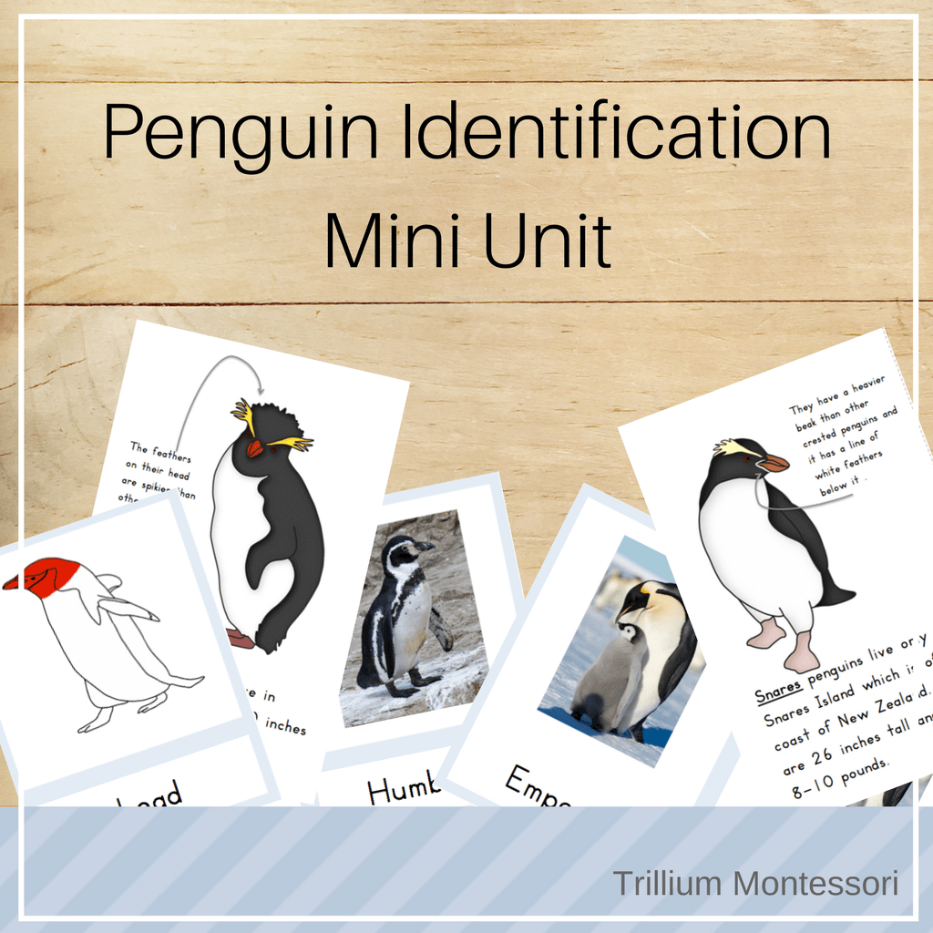 Free Printable Life Cycle Of A Penguin