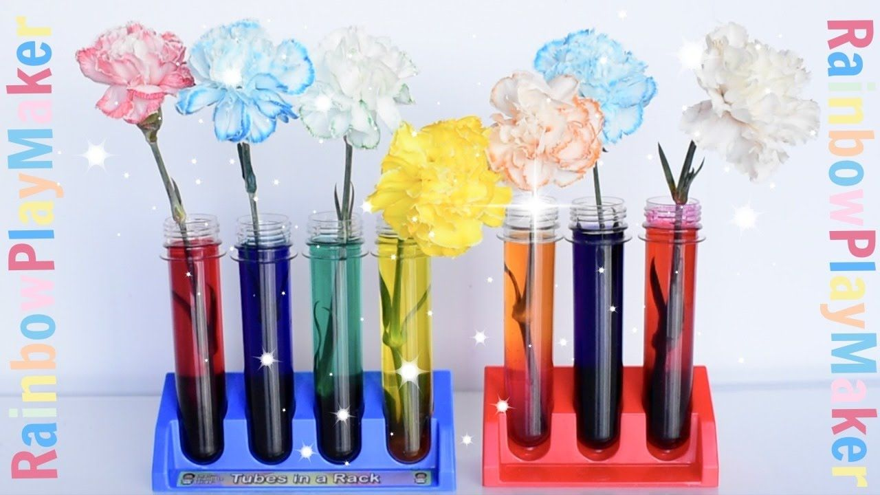 CARNATIONS RAINBOW COLOR CHANGING ♥ DIY SCIENCE EXPERIMENT
