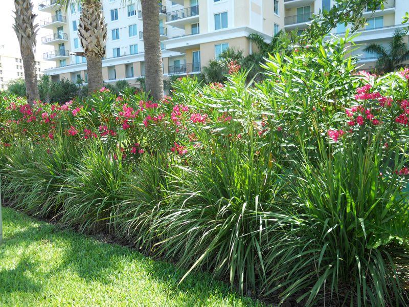 Pin By Janet Valadez On Outside Backyard Landscaping Florida Landscaping Backyard Plants