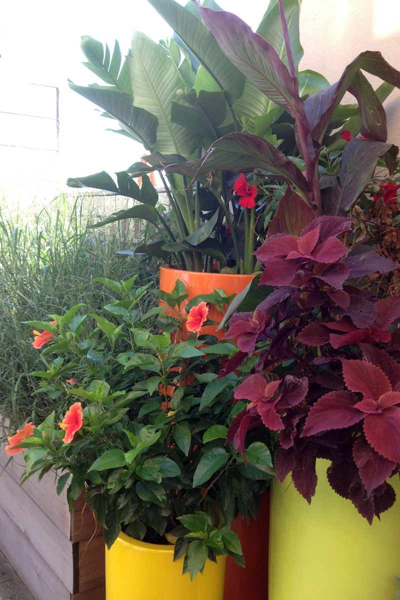 Shade Planters Ideas Container Plants