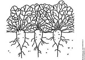 Sugarbeet Colouring Pages Coloring Pages Free Printable