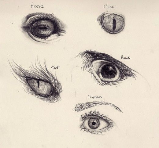 Sketches Of Animals Eyes