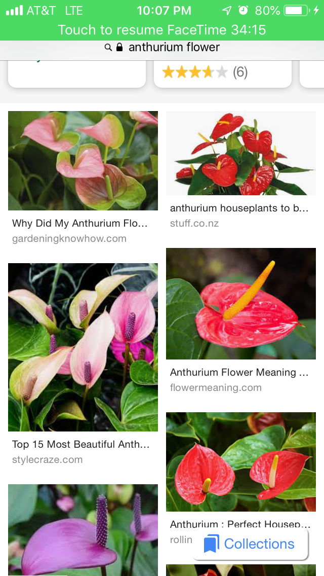 Pin By Joan Reed On Tattoos Anthurium Flower Flower Meanings Anthurium