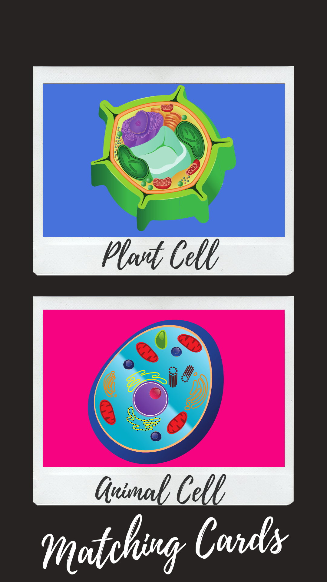 Cells Matching Cards Plant, animal cells, Matching